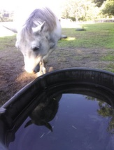 Water_Trough_13